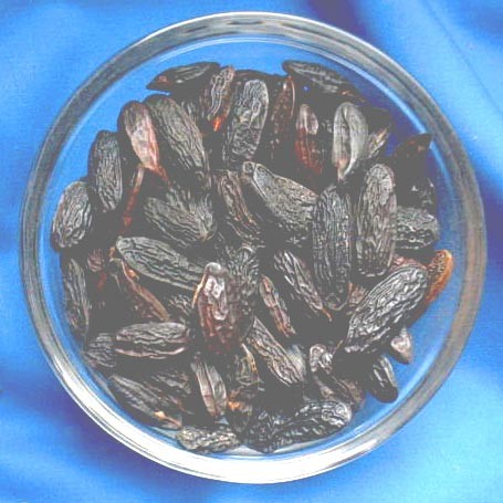 0.5 Kilo Tonkabohnen (Coumarouna odorata)